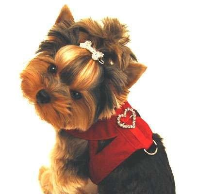 Red Velvet Dog Harness - XL