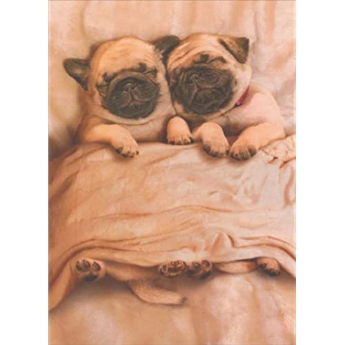 Pug Puppies Funny Dog Valentine's Day Card Sales