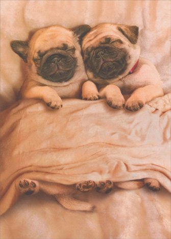 Pug-Puppies-Funny-Dog-Valentines-Day-Card