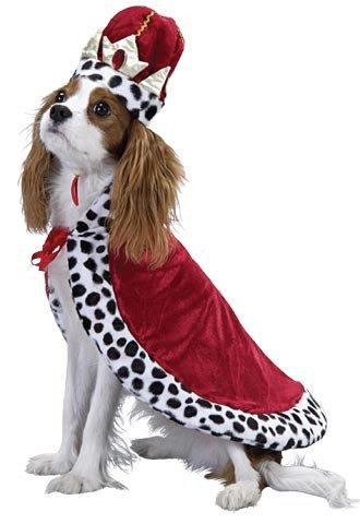 Pet King Dog Halloween Costume X Small Buy Online In