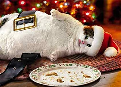 avanti press christmas cards fat cat cookie crumbs count of 10 701340 - Amazon Christmas Cards