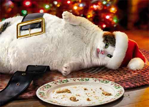 Cat Christmas.Avanti Press Christmas Cards Fat Cat Cookie Crumbs Count Of 10 701340