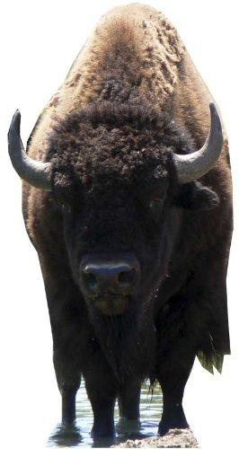 Bison - Wildlife/Animal Huge Cardboard Cutout / Standee / Standup