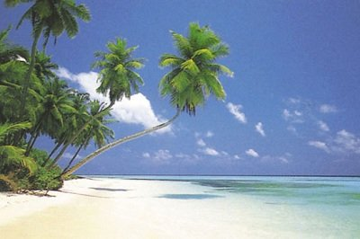 Maldive Morning Palm Tree Scenic Tropical Photography Decorative Poster Print 24 By 36