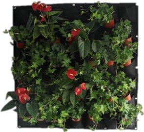 Mitefu Wandhalterung, für Pflanzen, für Innen- und ...