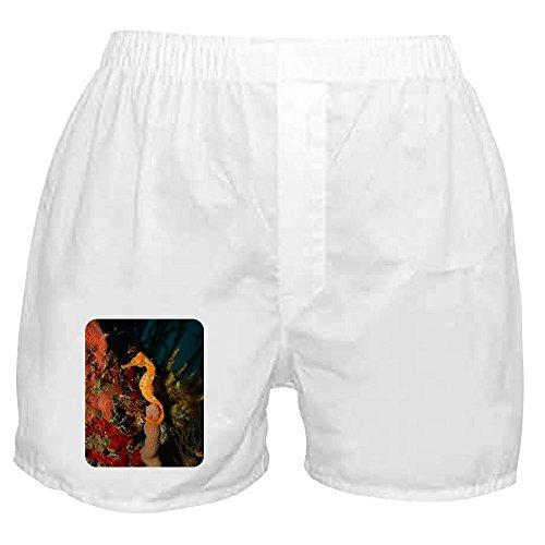 Royal Lion Boxer Short (Shorts) Seahorse Holding Coral - XL