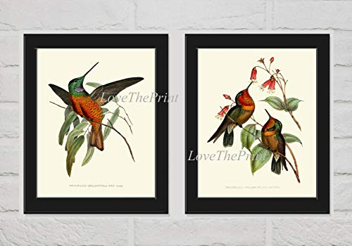 - Hummingbird Wall Art Print Set of 2 Prints Beautiful Antique Based Birds Flowers Pretty Cute Nature Home Room Decor LoveThePrint Unframed PZ