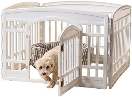 IRIS 586680 Ci 604E Pet White