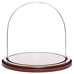 Plymor Brand 8 x 8 Glass Display Dome Cloche (Walnut Base)