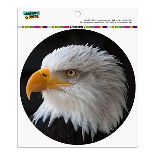 Bald Eagle Portrait - 9