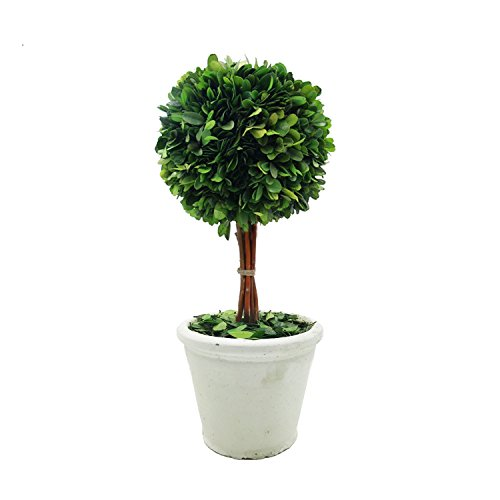 Preserved Boxwood Single Ball Topiary In Pot For Home Decor - 6''X14.2'' by DRWARE