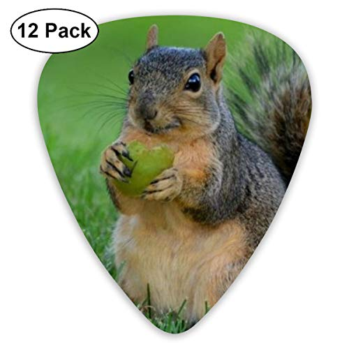 Squirrel Eat Pinecone Suitable for Electric Guitars, Acoustic Guitars, Guitar Selection 12 Pieces.