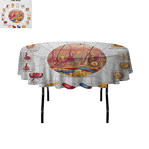 Educational Printed Tablecloth Skin Anatomy Elements in Round Shaped Diagram Pores Hair Roots Veins Sensory Desktop Protection pad D55 Inch Multicolor ()