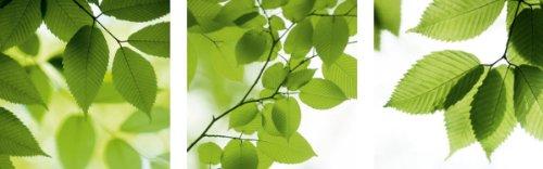 Цвет: Листья