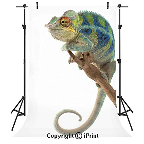 Reptile Photography Backdrops,Exotic Panther Hanging from Branch Watching the World Wild Life Nature Animal Earth Print Decorative,Birthday Party Seamless Photo Studio Booth Background Banner 3x5ft,Mu ()