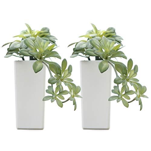 Tuokor TUOKORGREEN Small Artificial Succulent Plants Faux Greenery Green Aeonium arboreum Design, 8.6″ High, Set of 2