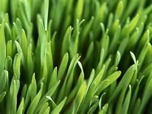 Premium Turf Kentucky Blue Grass Seed Blend - 10 pound - Wizard Seed LLC