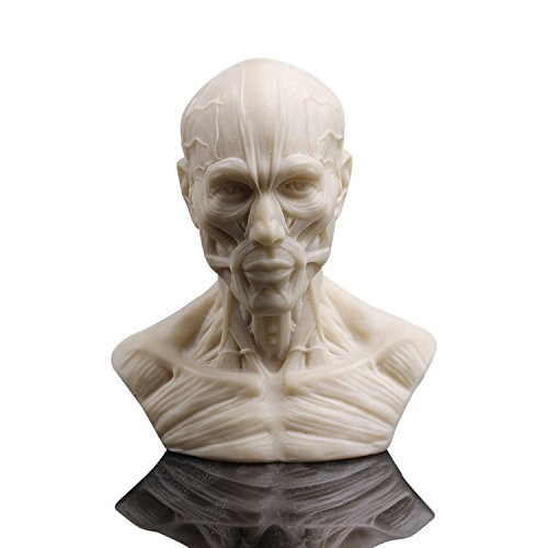 Lab Bust (Zgood Human Bust Sculpture Statue Resin Sketch Draw Plaster Cast Artist Model Decor)