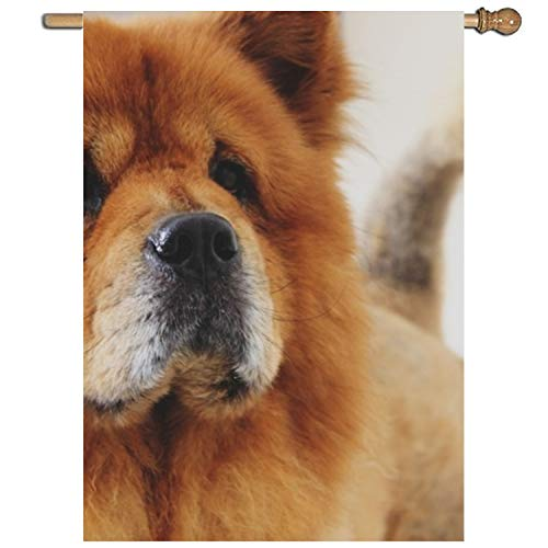 efyh Premium Garden Flag,Animal,Canine,Chow Decorative Home Flags - Weather Resistant 27 × 37
