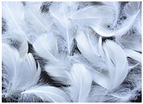 TommoT 300pcs White Feathers for Crafts and Arts