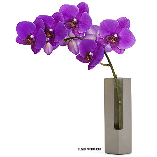 (Casadorna Modern Flower Vase Glass Tube with Polished Concrete - Orchid Bud Vase Glass Tube Flower Vase | Decorative Centerpiece for Table Wedding Hotel Office Home Decor Floral Display | 8