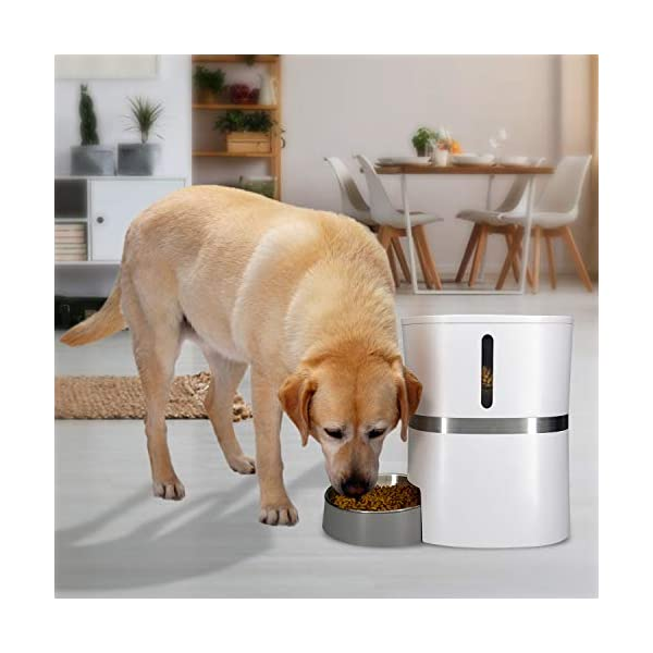 HoneyGuaridan A36 Automatic Pet Feeder, Dog, Cat, Rabbit & Small Animals Food Dispenser with Stainless Steel Pet Food… Click on image for further info. 7