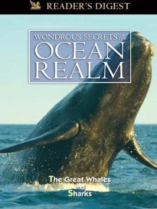 wondrous-secrets-of-the-ocean-realm-the-great-whales-sharks