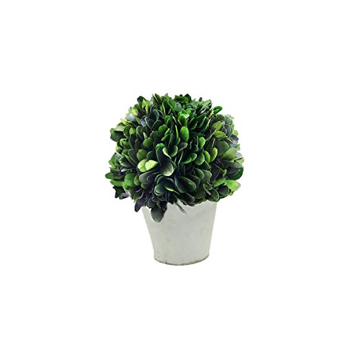 "COCOMIA Preserved Boxwood Ball with Small Pot – Natural Indoor Greenery, Simple Care, 4""Wx4""Dx5.9""H by COCOMIA"