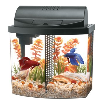 .com : aqueon aquarium betta-bow 2.5 gallon acrylic aquarium ...