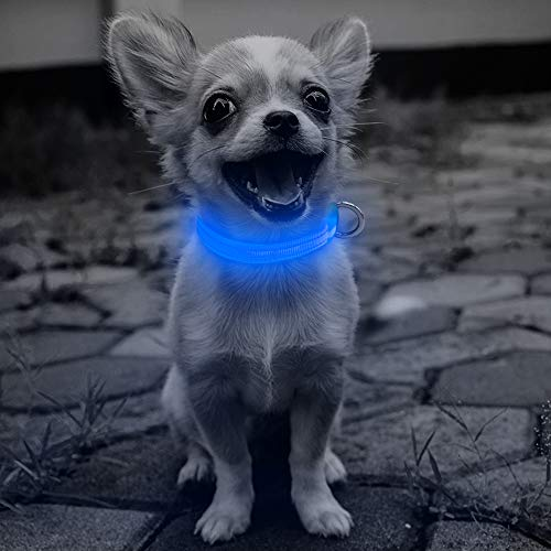 Domi LED Dog Collar, USB Rechargeable Lighted Collar, Adjustable Reflective Glowing Collar Keep Your Small Dogs and Cats Be Seen& Safe in the Dark(XS, Blue)