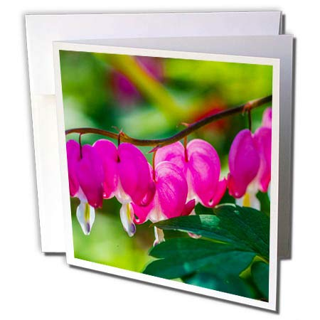 Curved Heart Pink (3dRose Alexis Photography - Flowers Bleeding Heart - Curved line of Pink Bleeding Heart Flowers. Green Leaves - 6 Greeting Cards with envelopes (gc_288816_1))