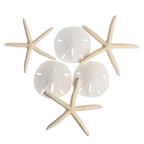 White Finger Starfish and Sand Dollar Collection | (3) 4