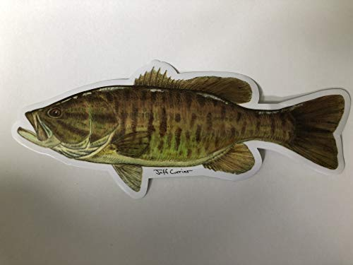 Pescador on the Fly | Trout Species Decals | Designed by Jeff Currier | Stunning Detail | Great Gift Idea for Fisherman Waterproof Vinyl Stickers | Smallmouth Bass | 10 Inch