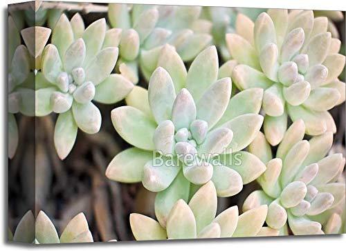 多肉植物植物。ギャラリーWrappedキャンバスアート 11in. x 14in. B077S7JL4L  11in. x 14in.