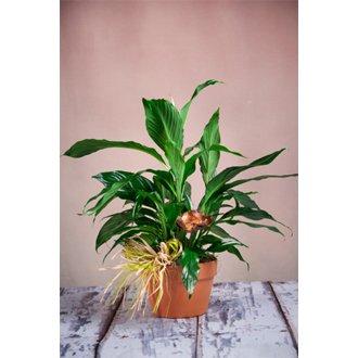 ABQ Florist Signature Terracotta Planter - Fresh Flowers Hand Delivered in Albuquerque Area