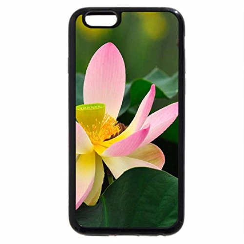 iPhone 6S / iPhone 6 Case (Black) West India Lotus