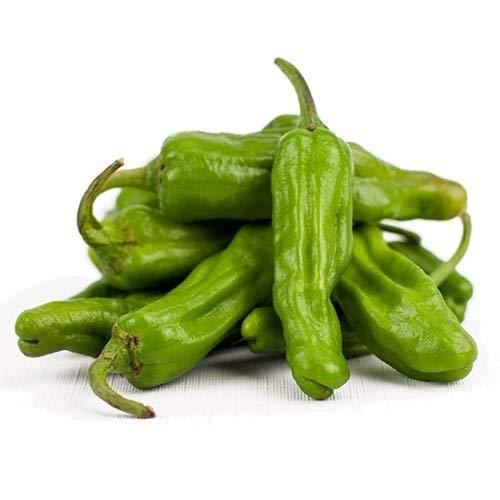 Shishito Pepper Plants Six Pack! ()