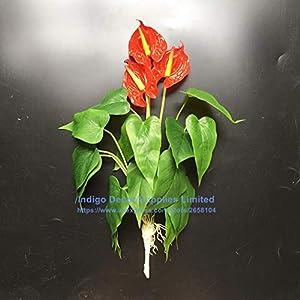 ShineBear Anthurium Bouquet Calla (18pcs Leaves + 3 Flowers) Calla Real Touch Wedding Display Flower Artificial Home Flower - (Color: 1 Bouquet, Size: 40-45cm) 69