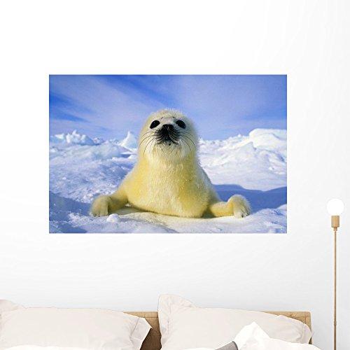 (Wallmonkeys Newborn Harp Seal (Phoca Groenlandica) Pup (yellowcoat) Wall Decal Peel and Stick Graphic WM249727 (36 in W x 24 in H))