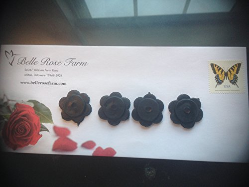 Belle Rose Farm Belle Rose Belle Rose Farm