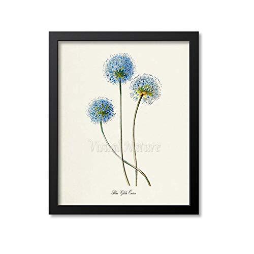 Les Connie Blue Globe Onion Flower Art Print Botanical Art Print Flower Wall Art Flower Print Floral Print Blue Flower Art Print ()