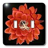 3dRose LLC lsp_32364_2 Decorative Colorful Garden Botanic Classic Plant Sw Southwest Desert Cactus Red Black Flower Double Toggle Switch