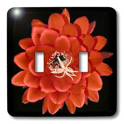 3dRose lsp_32364_2 Decorative colorful garden botanic classic plant SW Southwest Desert cactus red black flower Toggle Switch