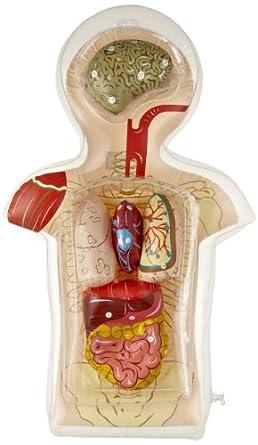 American Educational Inflatable Torso Model