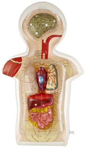 American Educational Inflatable Torso (Inflatable Lungs Kit)