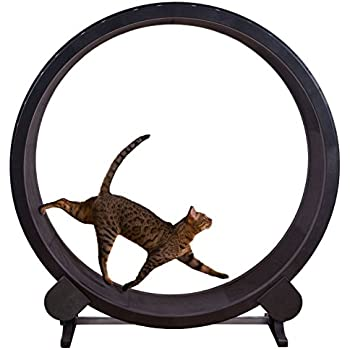 One Fast Cat Exercise Wheel (Black)