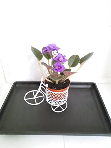 minigardenn-novelty-african-violet-plant-with-mini-bicycle-unique-from-jmbamboo
