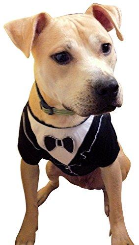 Dog Tuxedo, Frenchie Mini Couture (Small)