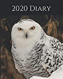 "2020 Diary: Weekly Planner & Monthly Calendar - Desk Diary, Journal, Snowy Owl, Alaskan Owls, Alaska, North American Wildlife, Arctic Wildlife, Arctic ... Birds - 8x10"" (Creative Fusion Diary Series)"