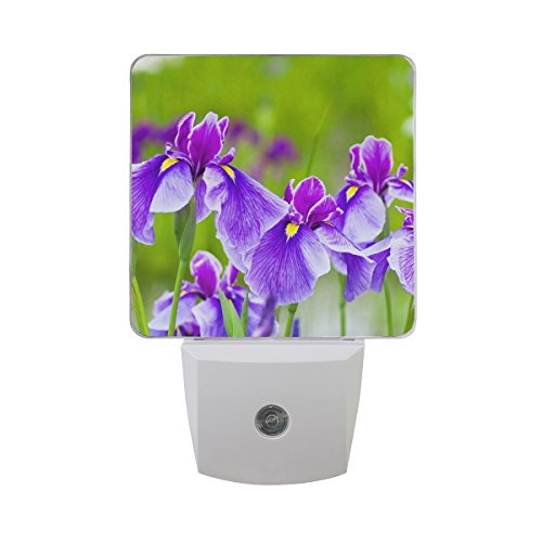 (Naanle Set of 2 Violet Purple Iris Flowers Spring Floral On Nature Dim Green Woodland Auto Sensor LED Dusk to Dawn Night Light Plug in Indoor for)